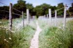 Clanfield Meadow, Ferrania Solaris 100